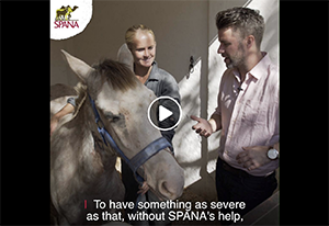 Saving a horse with colic
